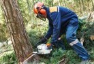 Acacia Creek Tree cutting services 21